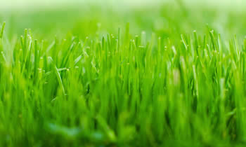 Lawn Service in Royal Oak MI Lawn Care in Royal Oak MI Lawn Mowing in Royal Oak MI Lawn Professionals in Royal Oak MI