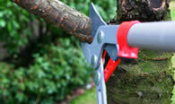 Tree Pruning Services in Royal Oak MI