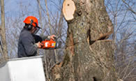 Tree Removal in Royal Oak MI